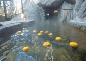 yuzu ofuro lázně bath